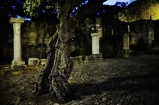Tree Lisbon 5-11-11